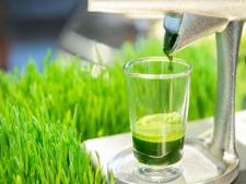 Fresh Wheatgrass Shot